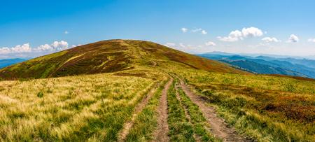 パノラマの山の尾根上の芝生の草原で未舗装の道路。カルパティア山脈の美しい夏の風景