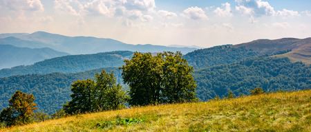beautiful panorama of Carpathian mountains in early autumn weather. few beech tree tops behind the grassy slope of a ridge under sky with clouds
