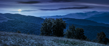 beautiful panorama of Carpathian mountains in early autumn weather. few beech tree tops behind the grassy slope of a ridge under sky with clouds at night in full moon light