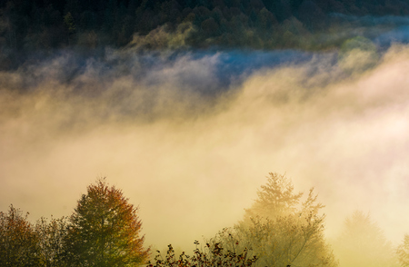 glowing fog rise over the forest on hillside. lovely autumn nature background in countryside Stock Photo