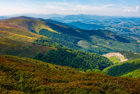 grassy mountain tops with forests on slopes. Gorgeous view on Carpathian valley in evening Фото со стока