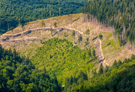 path through forest clearing on mountain slope. nature background view from the top of a hillside