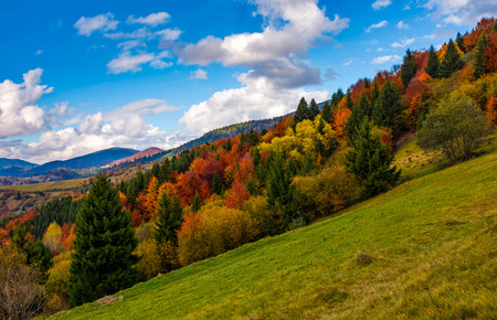 mountains with colorful foliage forest on slippery slope. great autumnal landscape in fine weather and clouds on blue sky