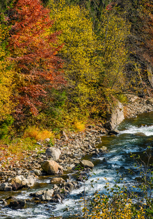 powerful mountain brook with rocky shore among colorful foliage. lovely autumnal nature background