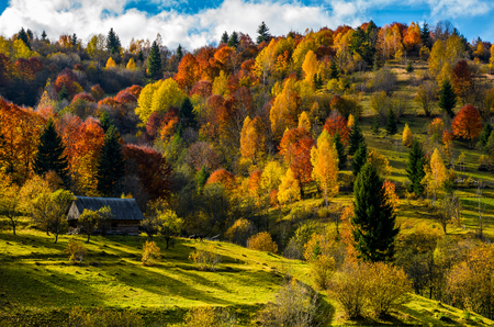 abandoned wooden house in autumn forest. beautiful rural scenery on sunny sunset