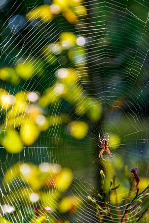lovely background with spider in the web on beautiful foliage bokeh Stock Photo