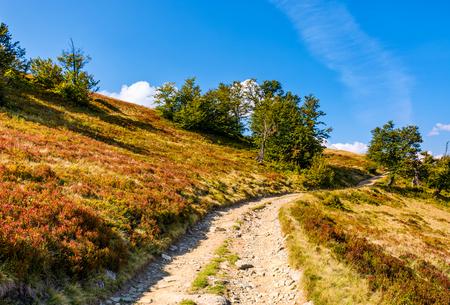 森と丘の中腹から山道。午後秋晴れの素敵な草が茂った斜面 写真素材