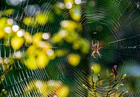 lovely background with red spider in the web on beautiful forest foliage bokeh Stock Photo