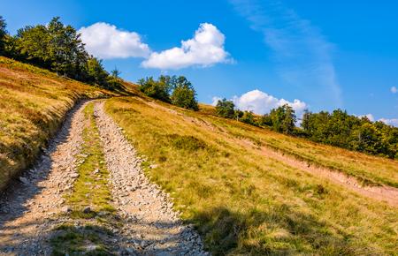 ブナの森の丘の中腹から山道。午後秋晴れの素敵な草が茂った斜面 写真素材