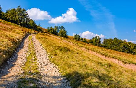 mountain road through hillside with beech forest. lovely grassy slopes in fine autumn afternoon weather Stock Photo