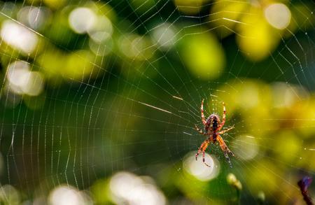 mooie achtergrond met spin in het web op mooie gebladerte bokeh Stockfoto