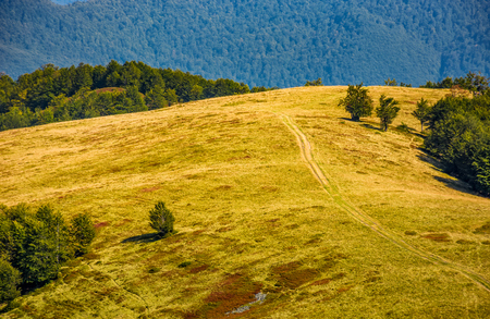 path through weathered grassy alpine meadow on beech forest background on top of a hill. lovely mountains scenery on early autumn sunny day. Stock Photo