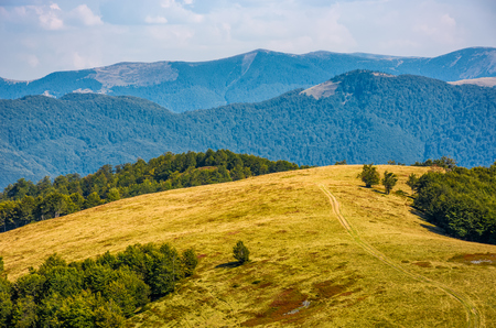 path through weathered grassy alpine meadow near the beech forest on top of a hill. beautiful mountains scenery on early autumn sunny day.