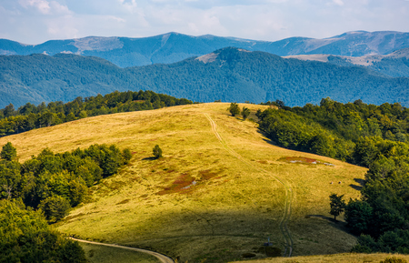 weathered grassy alpine meadow near the beech forest on top of a hill view from above. lovely carpathian mountains scenery on early autumn sunny day. 版權商用圖片