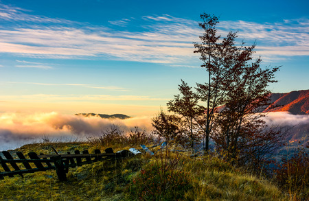 tree on a hump above the ridge and clouds at sunrise. exquisite autumnal scenery in mountainous landscape Stock Photo