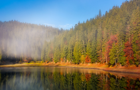 forest in autumn morning fog on the lake. beautiful and vivid scenery with colorful foliage and abstract reflections in fog