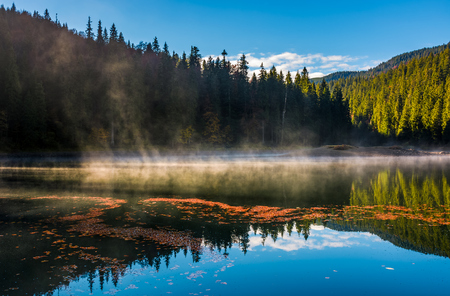fog rise over forest lake in mountains at sunrise. absolutely stunning autumnal nature scenery with morning glowing mist in golden sun rays and reddish foliage sliding on water ripples Stock Photo