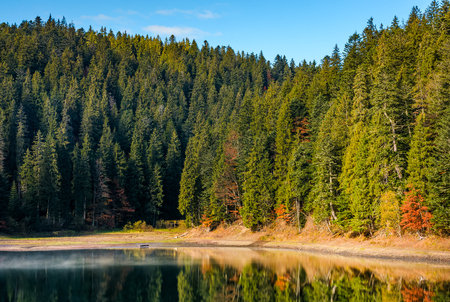 coniferous forest with hazy lake in mountains. beautiful autumnal morning weather