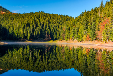 coniferous forest with lake in mountains. beautiful autumnal morning weather with clear blue sky