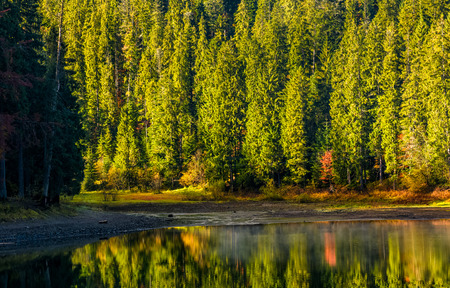 spruce forest with lake in mountains. beautiful autumnal morning weather Stock Photo