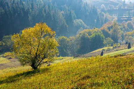 tree with yellow foliage on hills in countryside. beautiful countryside scenery in early autumn