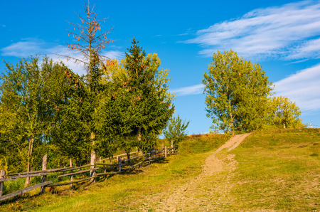 tree on a hillside behind the fence. beautiful countryside scenery in early autumn