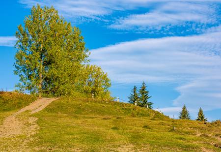 田園地帯の丘の上の黄色の葉を持つ木。初秋の美しい田舎の風景