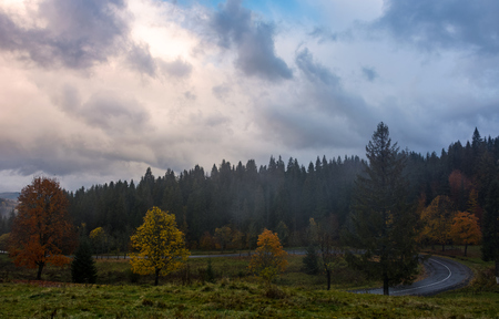 forest by the road on hillside in stormy weather. gorgeous autumnal environment in Carpathians Stock Photo