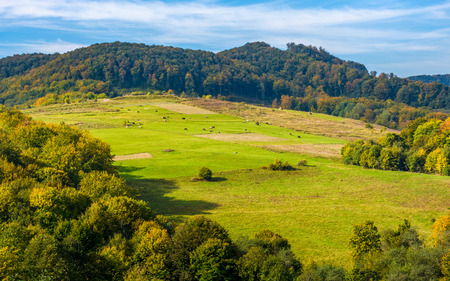 rural pasture fields near the forest on Carpathian hills. beautiful agricultural scenery in early autumn