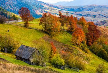 赤みを帯びた木と草で覆われた丘の中腹に薪小屋。中山間地域の豪華な秋の風景