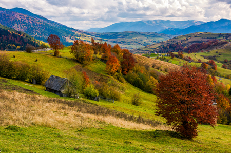 stunning rural landscape in mountains. woodshed and trees with red foliage on grassy hillside and a village in a far distance. gorgeous autumn scenery with ridge under cloudy sky Stock Photo