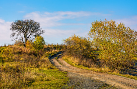 road among trees uphill to the sky. beautiful countryside scenery in late autumn Stock Photo