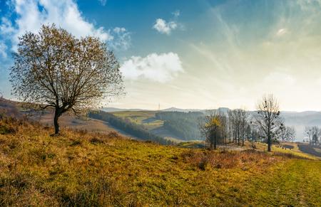 trees on hillside on beautiful autumn morning in mountains