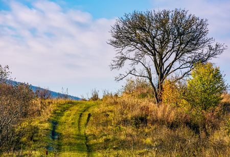 lonely tree by the road in autumn morning. beautiful countryside scenery Stock Photo