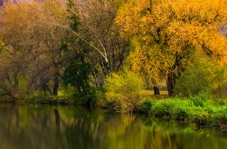 川の近くの黄色の葉を持つ林。水の表面に反映して豪華な鮮やかな秋の風景