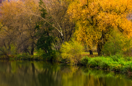 forest with yellow foliage near the river. gorgeous vivid autumn scenery reflecting in water surface