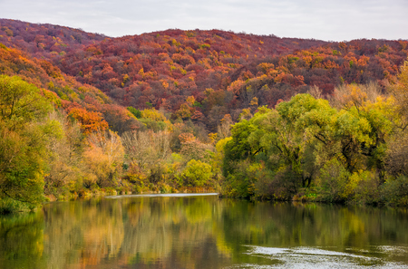 river in mountains among the forest in autumn. gorgeous vivid landscape reflecting in water surface on overcast day Stock Photo