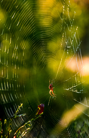 lovely background with spider in the web on beautiful foliage bokeh 版權商用圖片
