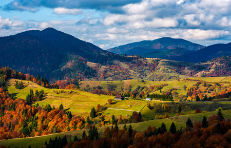 magnificent mountainous landscape in autumn. coniferous and deciduous trees with red vivid foliage on grassy hills in rural area. great sunny weather with gorgeous clouds on a blue sky