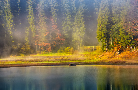 morning fog on the lake in spruce forest. gorgeous background of nature in autumn