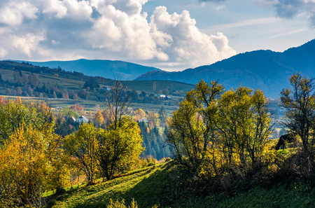 apple orchard on a grassy hillside. beautiful autumnal scenery in mountainous agricultural area