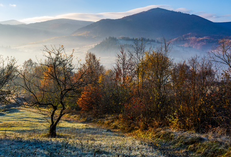apple orchard in mountains at autumn sunrise. trees with red foliage on frosted grass early in the morning. gorgeous countryside landscape in foggy weather Stock Photo