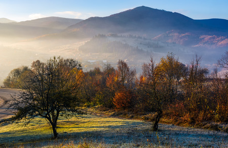 apple orchard in mountains at autumn sunrise. trees with red foliage on frosted grass near the road early in the morning. gorgeous countryside landscape in foggy weather