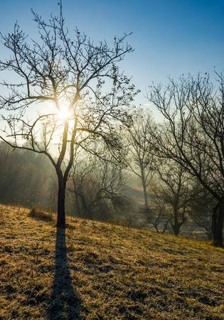 가 일출에 언덕에 사과 과수원입니다. 이른 아침에 서리로 덥은 잔디에 벌 거 벗은 나무. 안개가 자욱한 날씨에 아름다운 농촌 풍경 스톡 콘텐츠