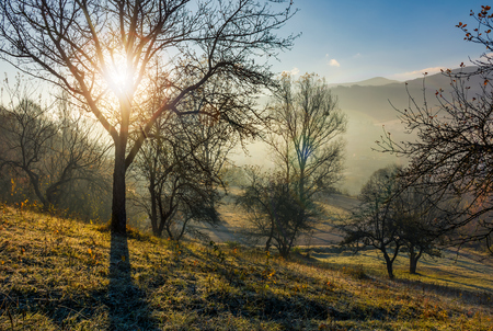 apple orchard on hillside at autumn sunrise. naked trees on frosted grass early in the morning near the road. lovely rural scenery in foggy weather Stock Photo