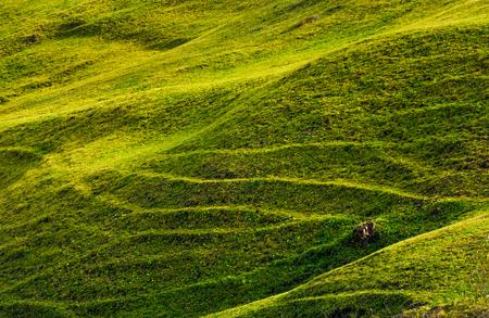 太陽の下で美しい草で覆われた丘の中腹。素敵な農業の背景
