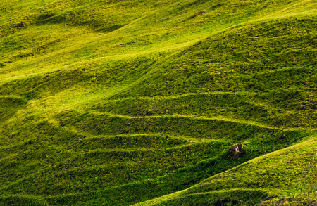 beautiful grassy hillside in sunlight. lovely agricultural background 版權商用圖片