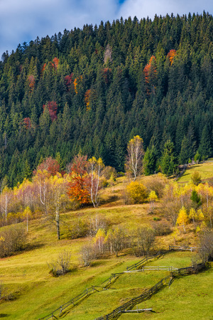 agricultural fields on hillside near forest. lovely autumnal scenery in mountains Stock Photo