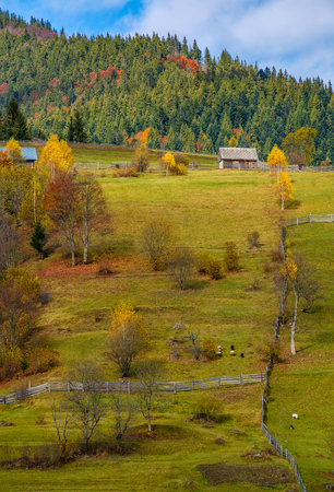 agricultural fields on hillside near forest. lovely autumnal scenery in mountains 版權商用圖片