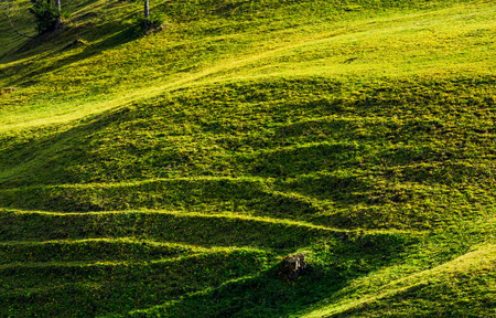 beautiful grassy hillside in sunlight. lovely agricultural background Stock Photo